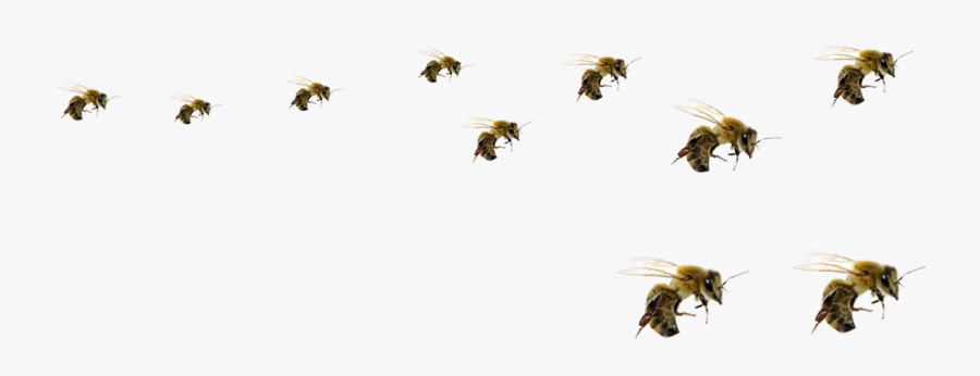 Honey Bee Png - Transparent Background Bees Png, Transparent Clipart