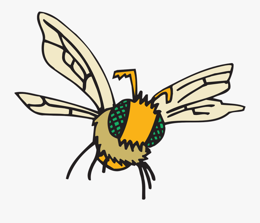 Eyes, Bee, Flying, Insect, Compound, Fuzzy, Fly - Compound Eyes Cartoon, Transparent Clipart