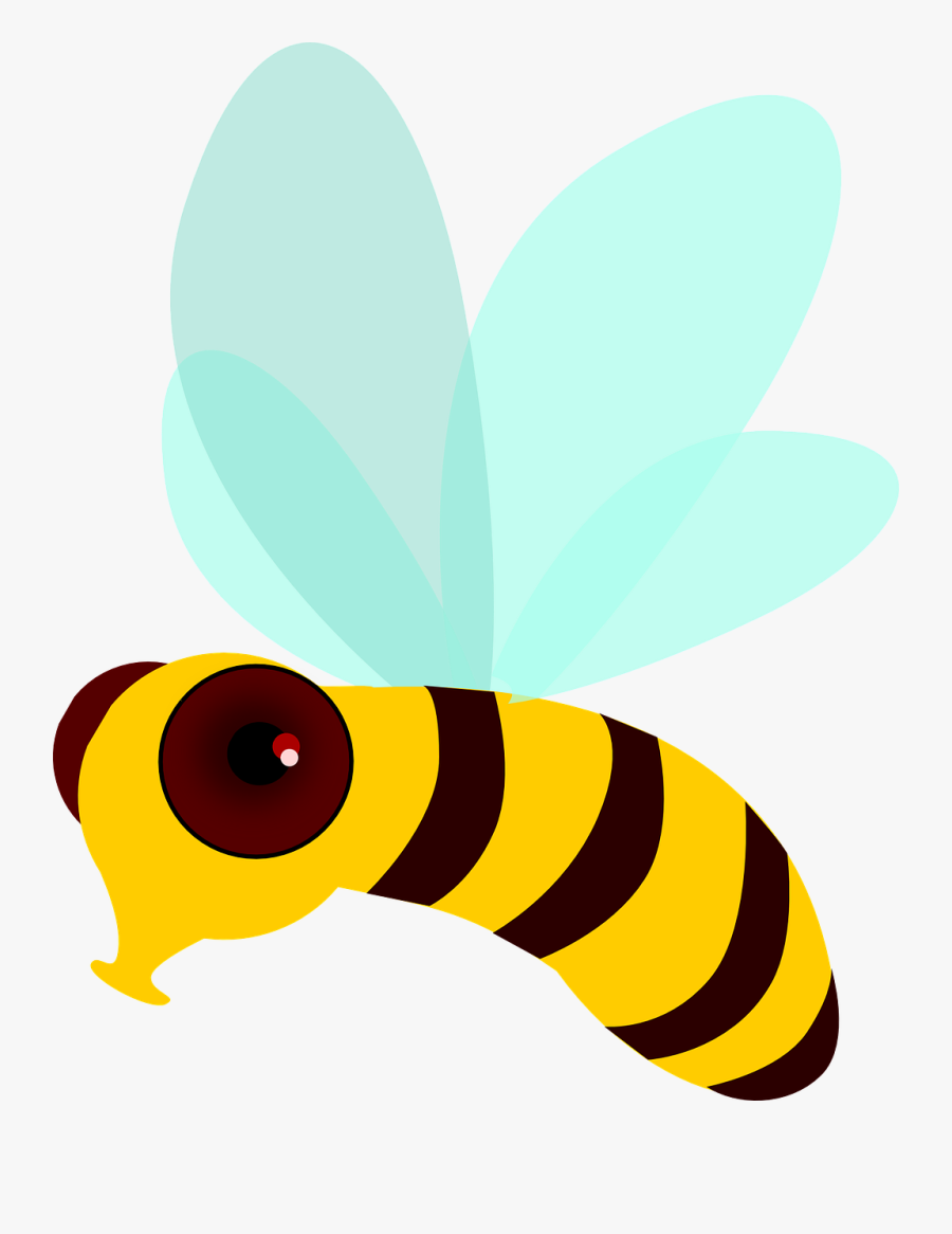 Honey Bee Bee Fly Insect Wings Png Image - ภาพ เคลื่อนไหว ผึ้ง บิน, Transparent Clipart