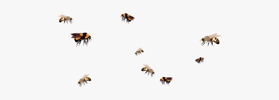 Bee - Honey Bee Flying Png, Transparent Clipart
