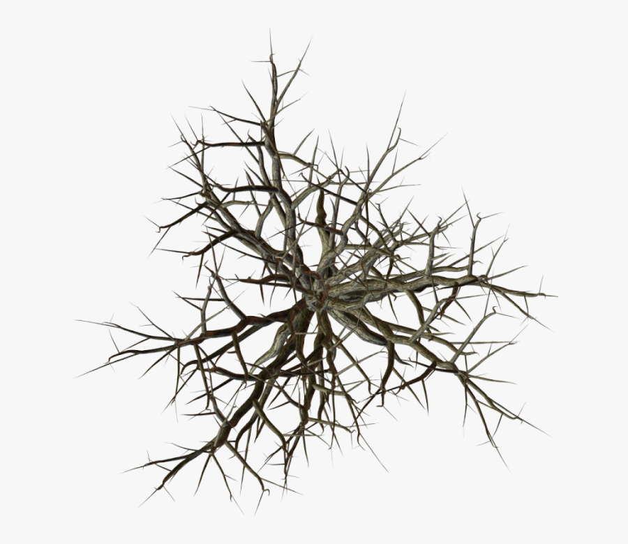 Index Of / - Dead Tree Top View, Transparent Clipart