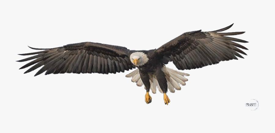 Transparent Eagle Clipart Png - Bald Eagle Png Transparent, Transparent Clipart