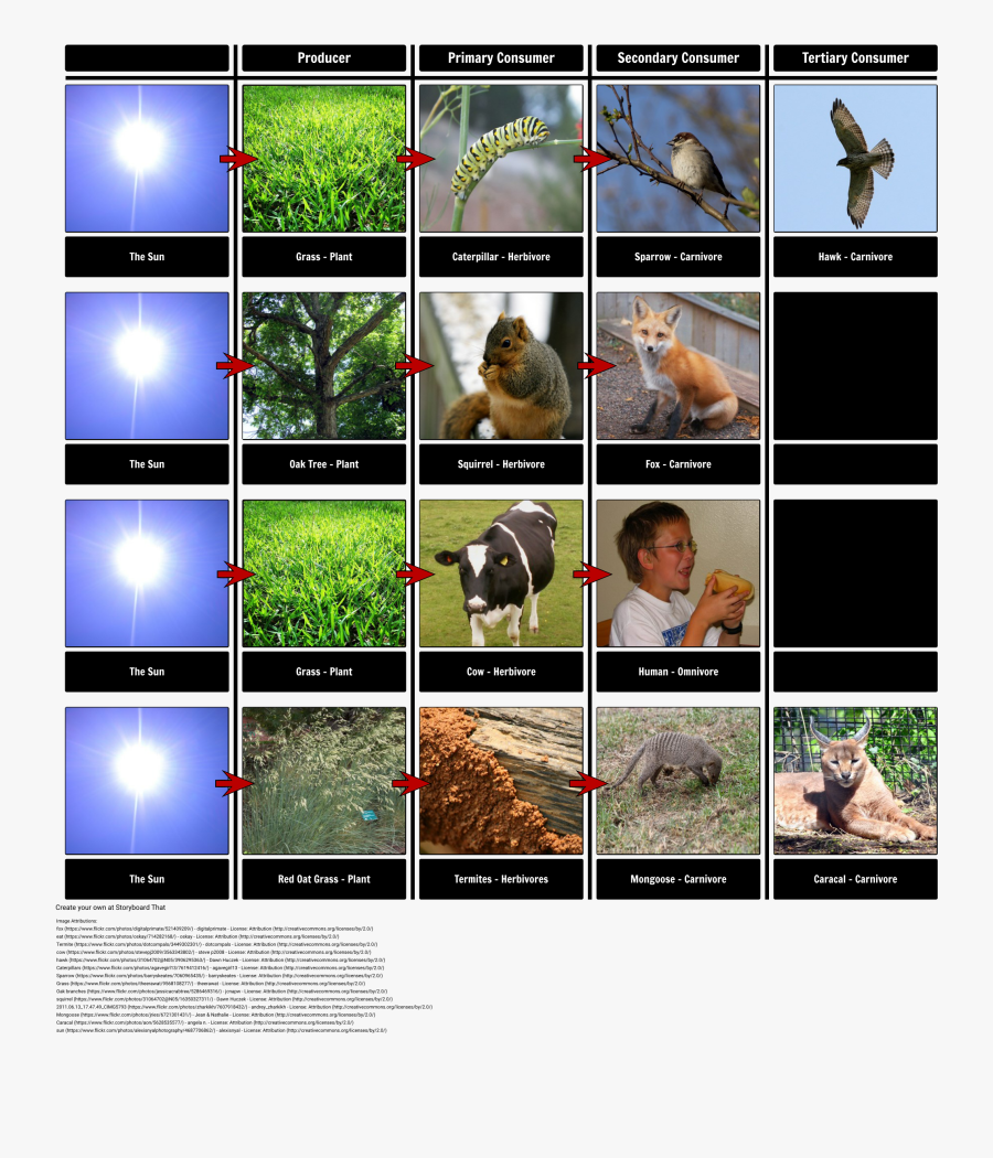 Food Chain Examples - Food Chain With An Orangutan, Transparent Clipart