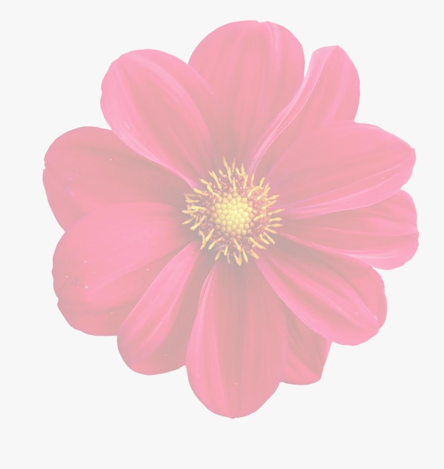 Dahlia Clipart Flower Blossom Gambar Kartun Bunga Dahlia Free