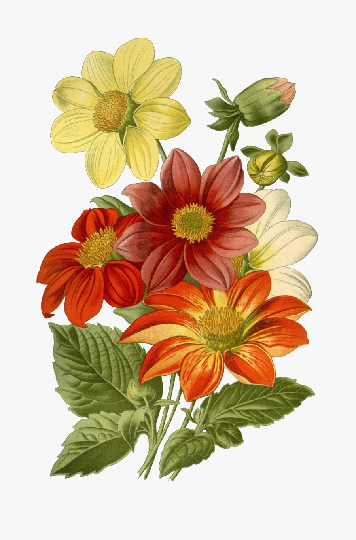 Transparent Vintage Floral Png - Iphone 6 Plus Case Yellow Flowers, Transparent Clipart