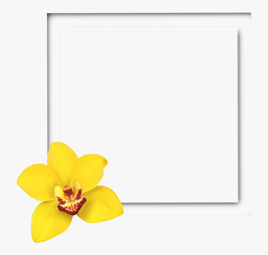 #square #frame #3d #yellow #flower #frames #border - Frame Yellow Flower Border, Transparent Clipart