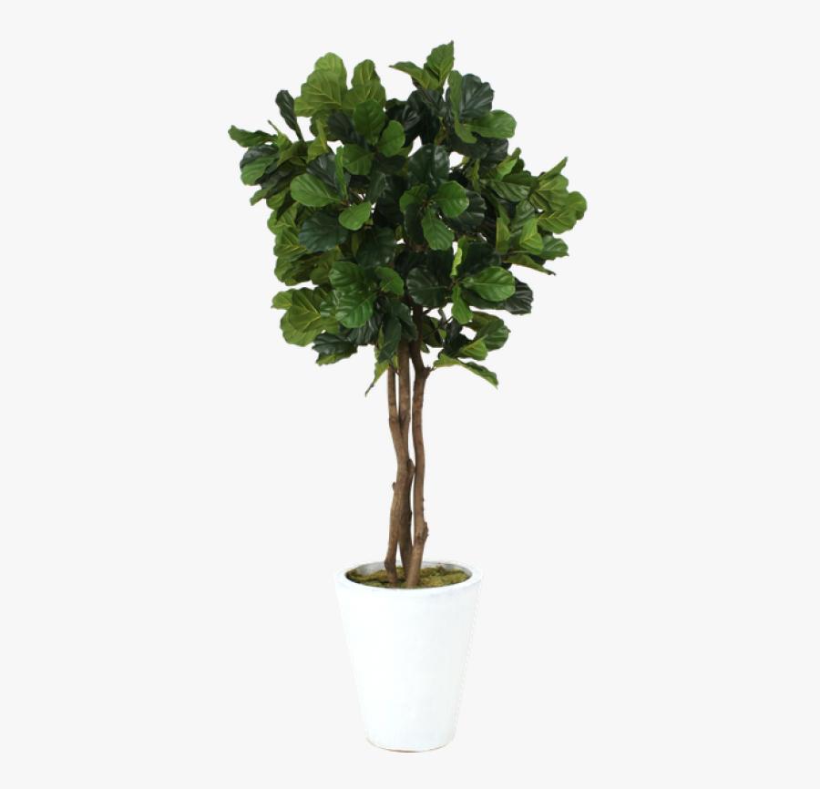 Fiddle Leaf Tree Transparent, Transparent Clipart