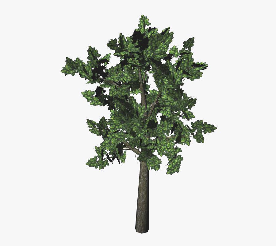 Post Oak Tree Leaves Download - Maple Leaf, Transparent Clipart