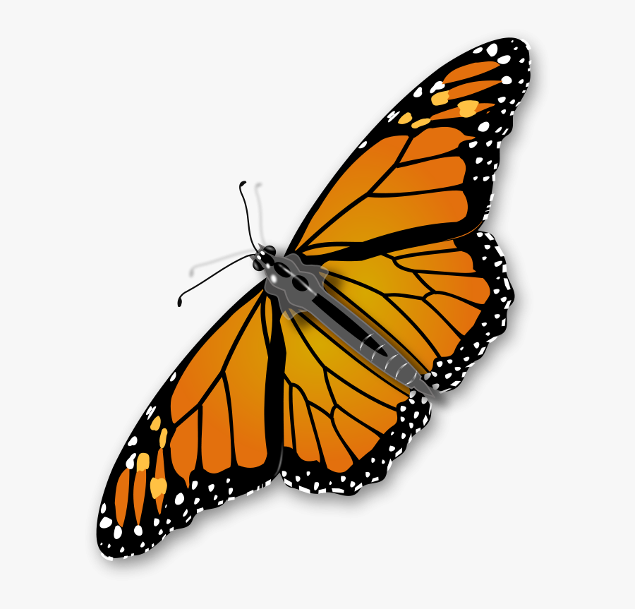 Domain Insects Clip Art Clipart Panda - Transparent Background Butterfly Gif, Transparent Clipart