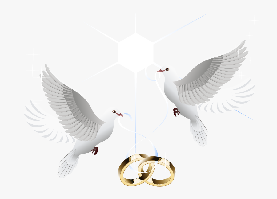 Ring Vector Marriage Wedding Download Hd Png Clipart Dove For Wedding Png Free Transparent Clipart Clipartkey