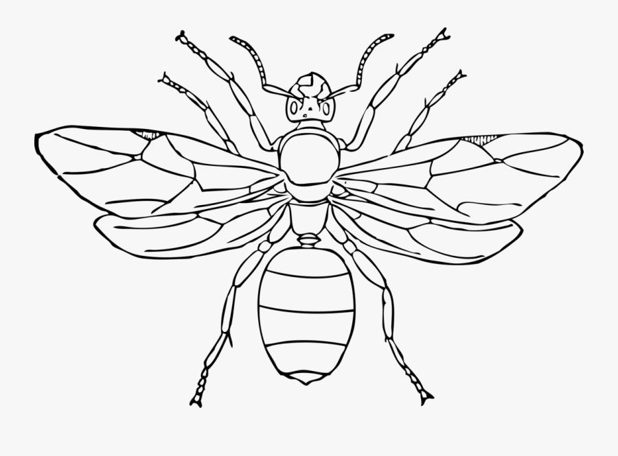 Bug Clipart Symmetry - Hormiga Reina Para Colorear, Transparent Clipart