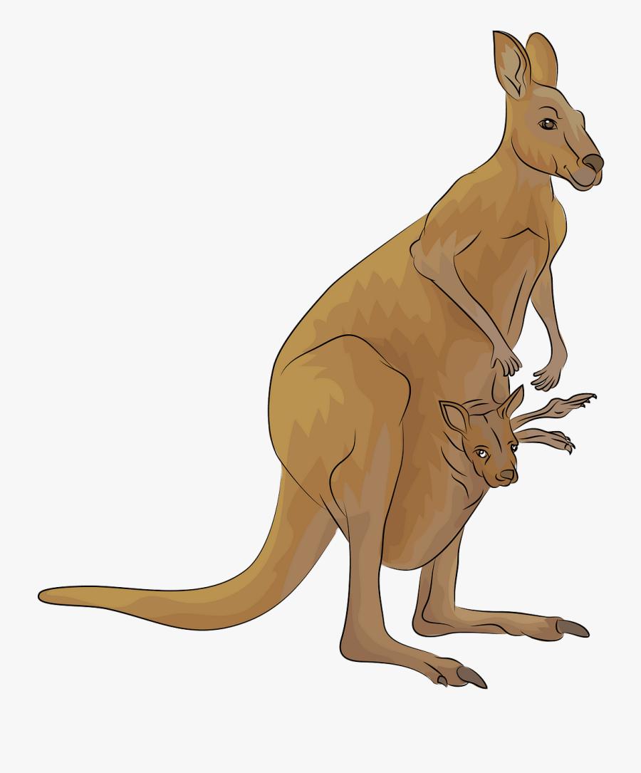 Kangaroo, Transparent Clipart