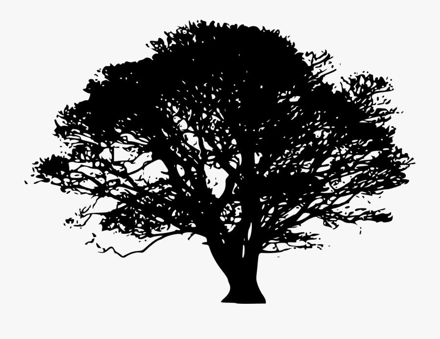 Tree Silhouette - Tree Black, Transparent Clipart
