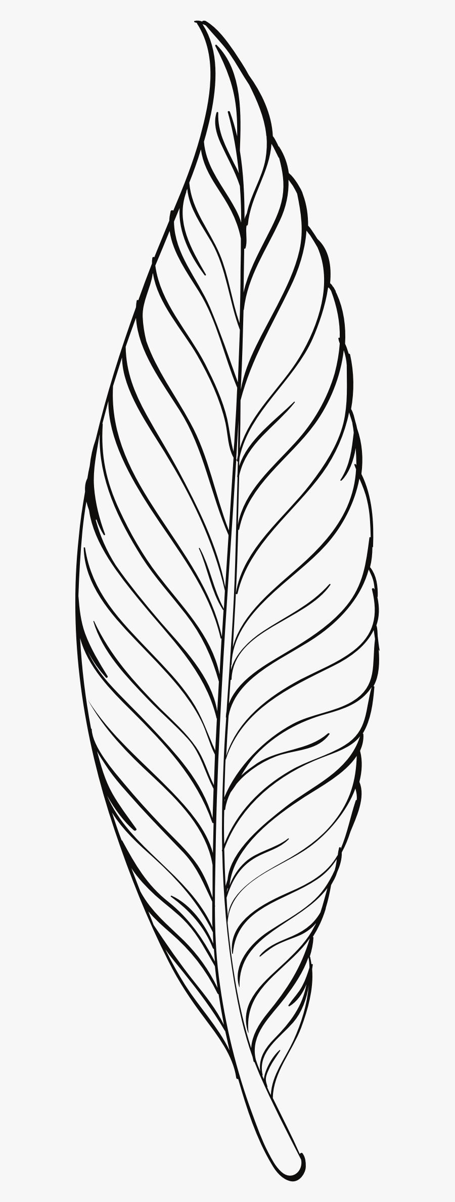 Feather Line Art Clip Arts - Plant Line Art Png, Transparent Clipart