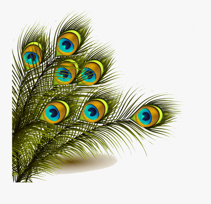 11 112949 peafowl feather clip art mor pankh images png
