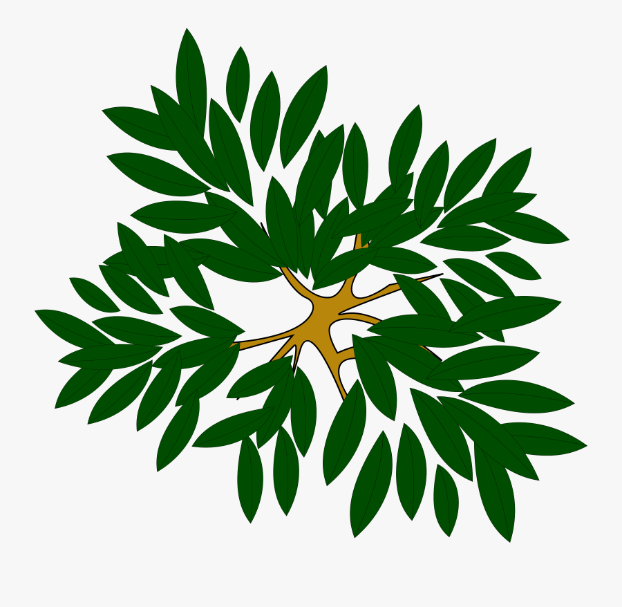 Computer Icons Tree Pine Plant Oak - Tree Clipart Top View, Transparent Clipart