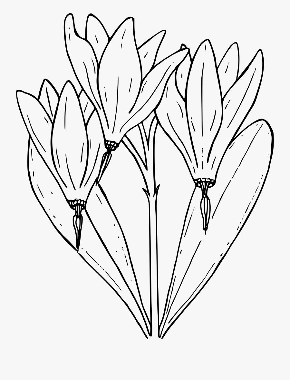 Clip Art Free Desert Star Big Image Png - Shooting Star Flower Drawing, Transparent Clipart