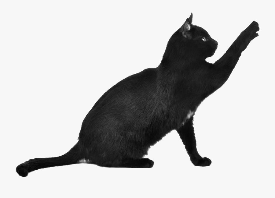 Black Cat Cat Png, Transparent Clipart
