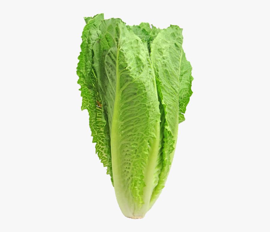 Lettuce Romaine Greens - Romaine Lettuce Vs Guns, Transparent Clipart