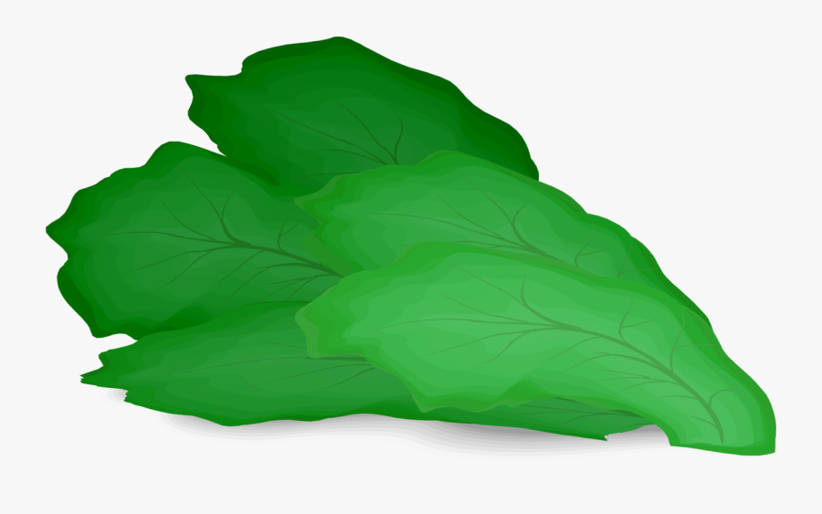 Clip Art Romaine Hamburger Salad Vegetable - Lettuce Leaf Clipart, Transparent Clipart