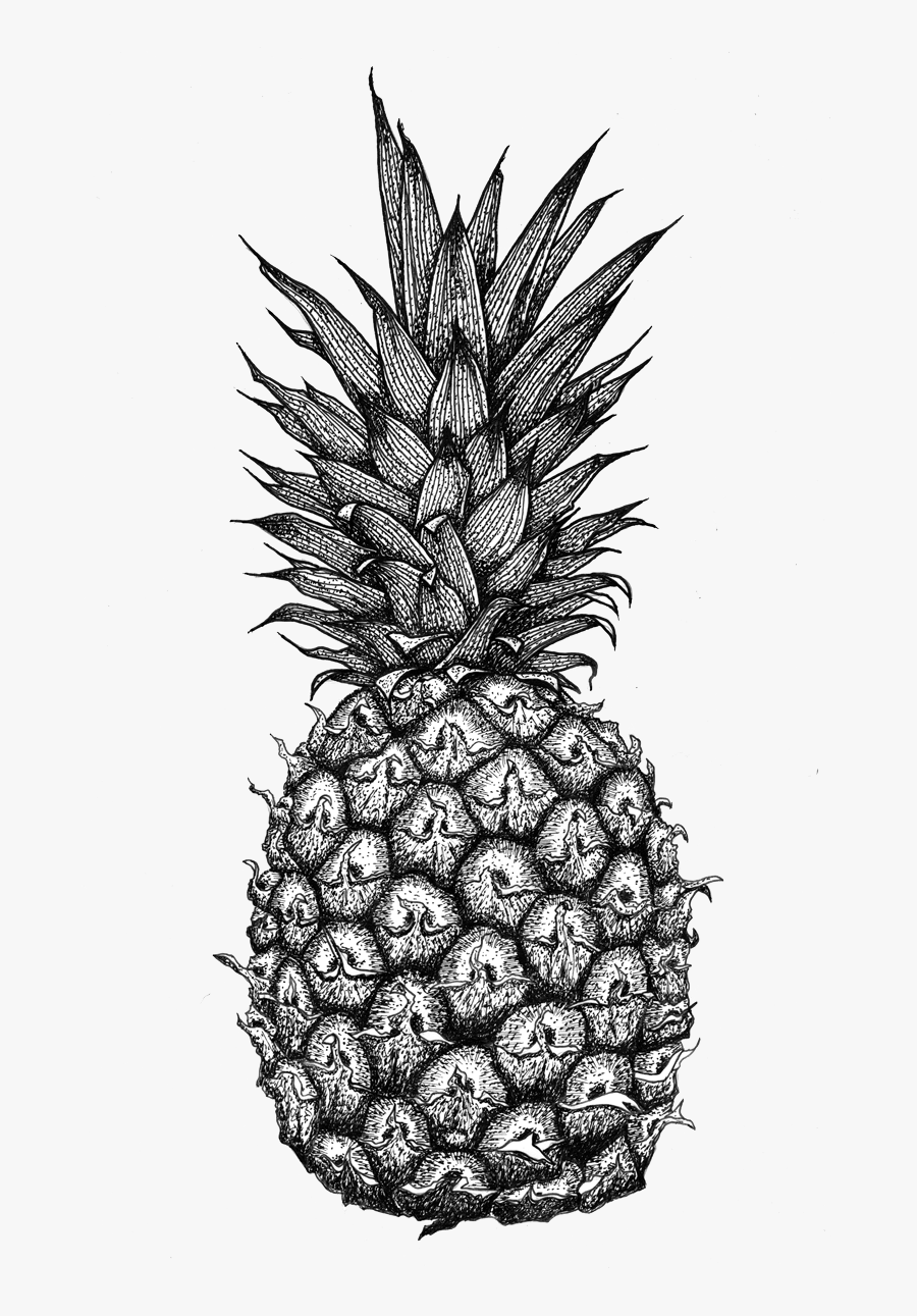 Transparent Pineapple Clipart Black And White - Pineapple Zentangle, Transparent Clipart