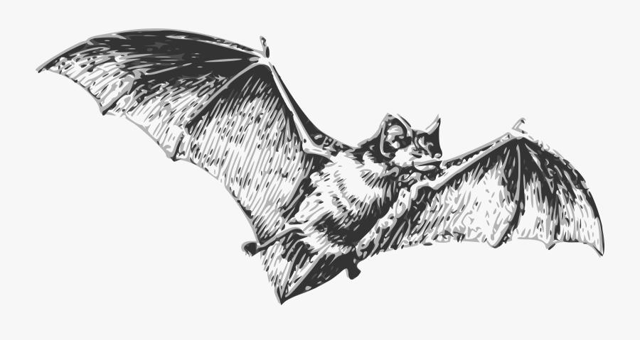 Visual Arts,bat,monochrome Photography - Bat Black And White, Transparent Clipart