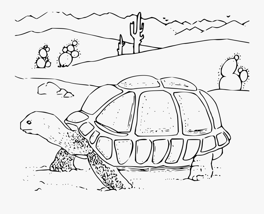 Desert Tortoise Big Image - Desert Tortoise Coloring Page, Transparent Clipart