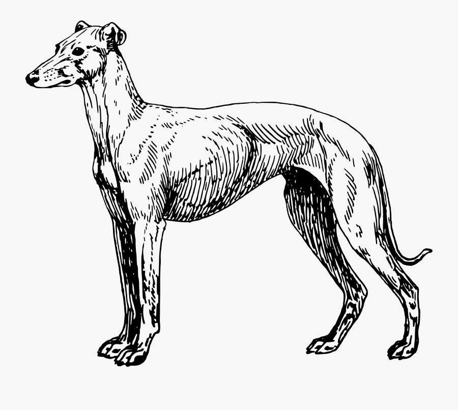 Greyhound Lines Greyhound Adoption Clip Art, Transparent Clipart