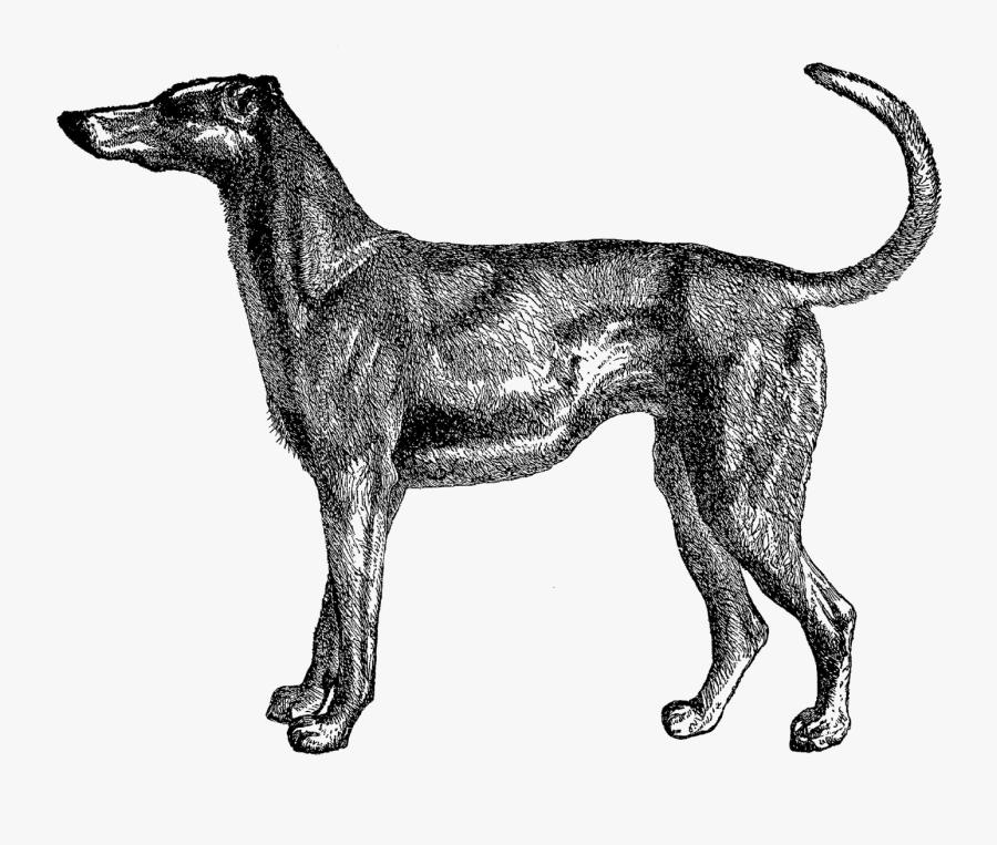 Transparent Dog Prints Png - Clip Art, Transparent Clipart