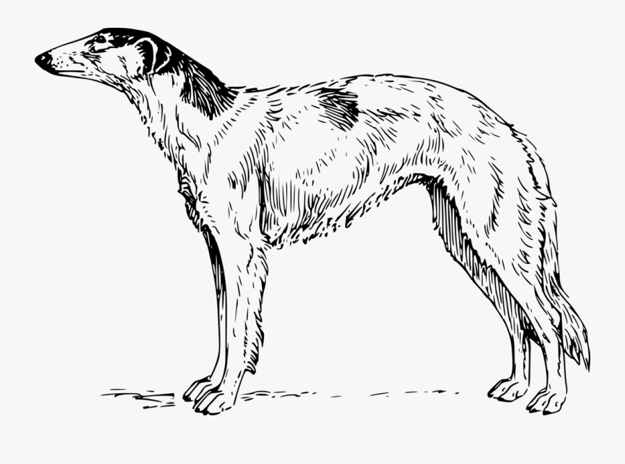 Line Art,wildlife,longdog, Transparent Clipart