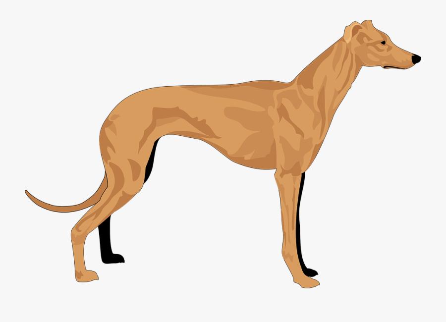 Dog, Grey, Pet, Hound, Animal, Mammal, Fur, Breed - Hound Clipart, Transparent Clipart