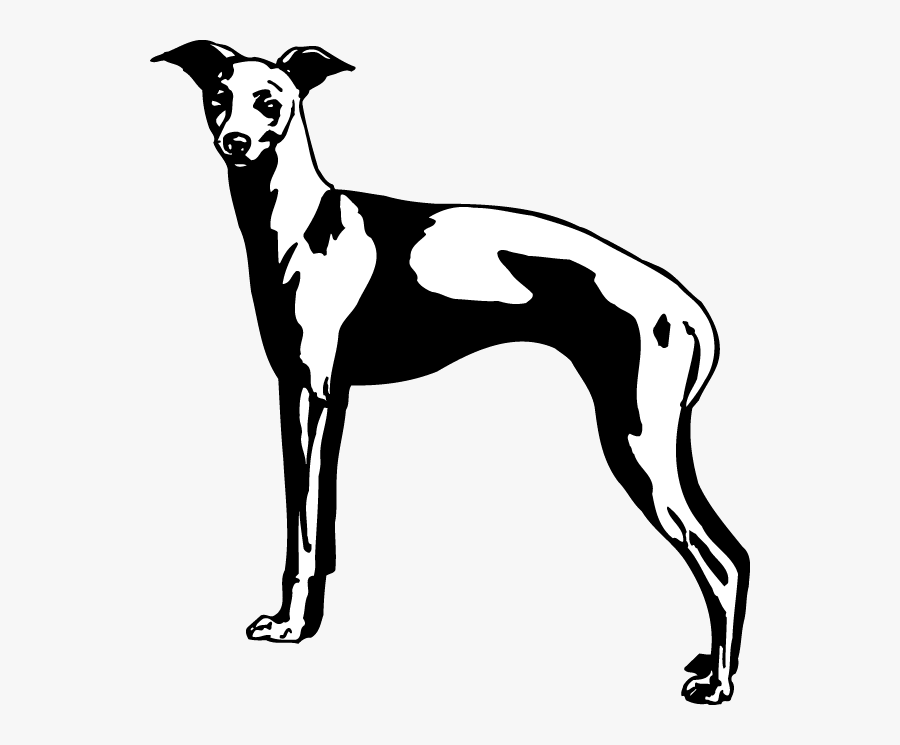 Rampur Greyhound, Transparent Clipart