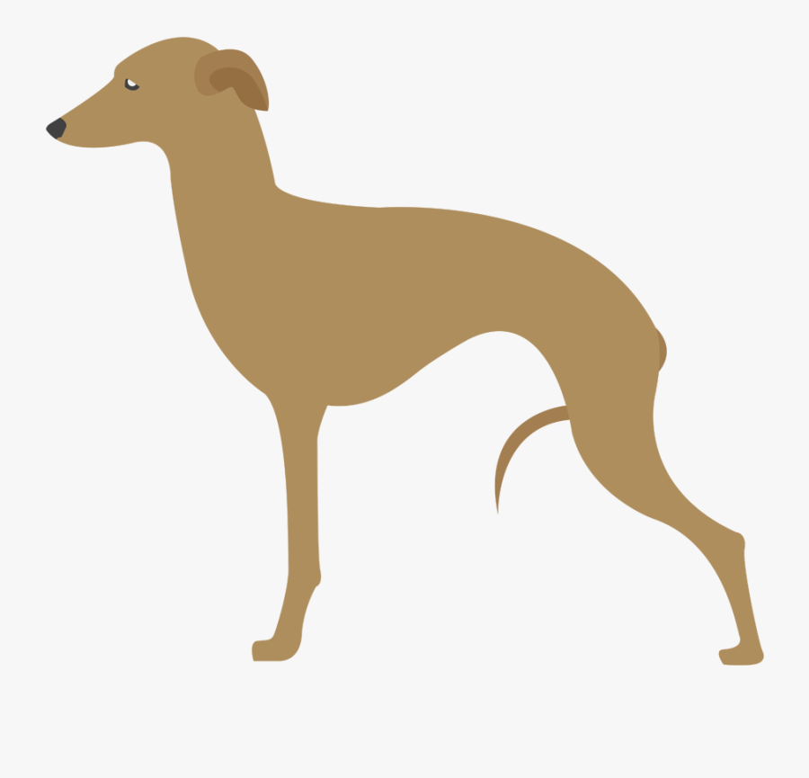 Clip Art Galgo Afego - Hunting Dog Breeds, Transparent Clipart