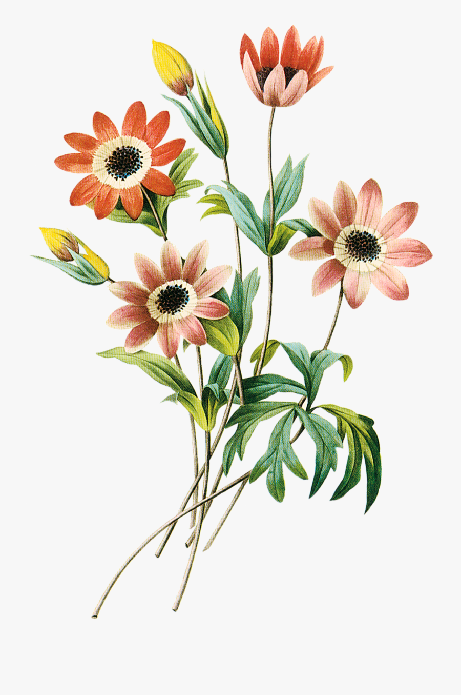 Clipart Grátis Flores - Flower Colored Pencil Drawings, Transparent Clipart