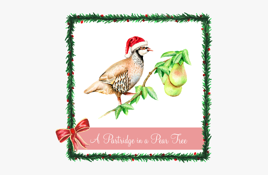 Christmas Partridge In A Pear Tree, Transparent Clipart