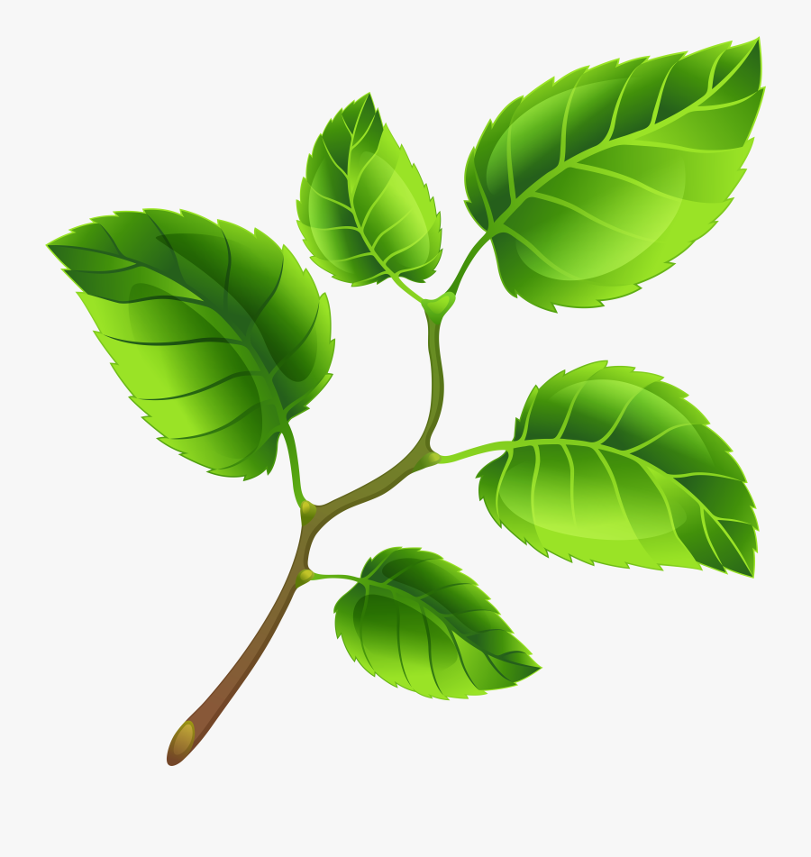 Spring Tree Clipart Transparent - Spring Leaves Clipart, Transparent Clipart