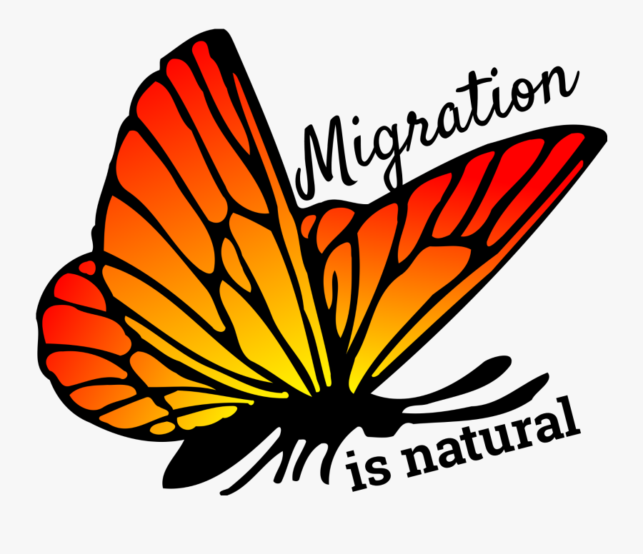 Butterfly Orange Color Png, Transparent Clipart