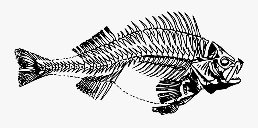 Line Art,skeleton,monochrome Photography - Fish Skeleton Transparent, Transparent Clipart