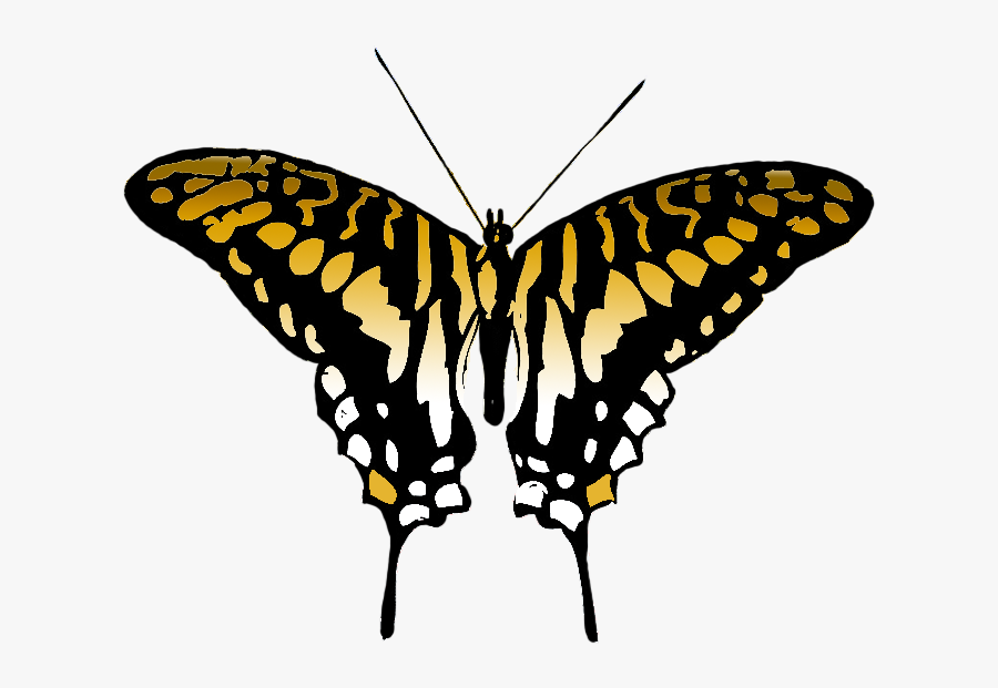 Butterfly Clipart Brown Colored Wings - Butterfly Wings Illustration Png, Transparent Clipart