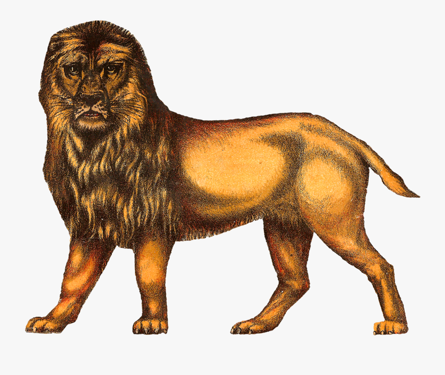 Despite The Much Shorter Tail, The Lion Still Looks - Circus Animal Clipart Vintage, Transparent Clipart
