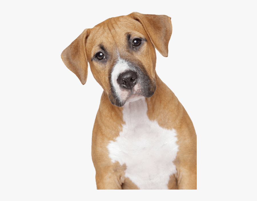 Dog Png Sad Dog No Background Free Transparent Clipart Clipartkey