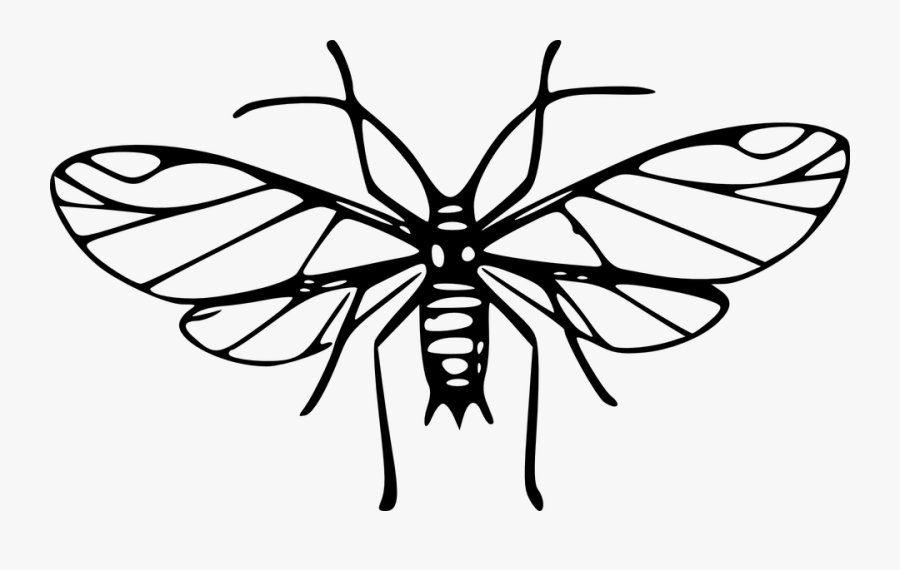 Aphid, Insect, Louse, Wings - Maskidos Black And White, Transparent Clipart