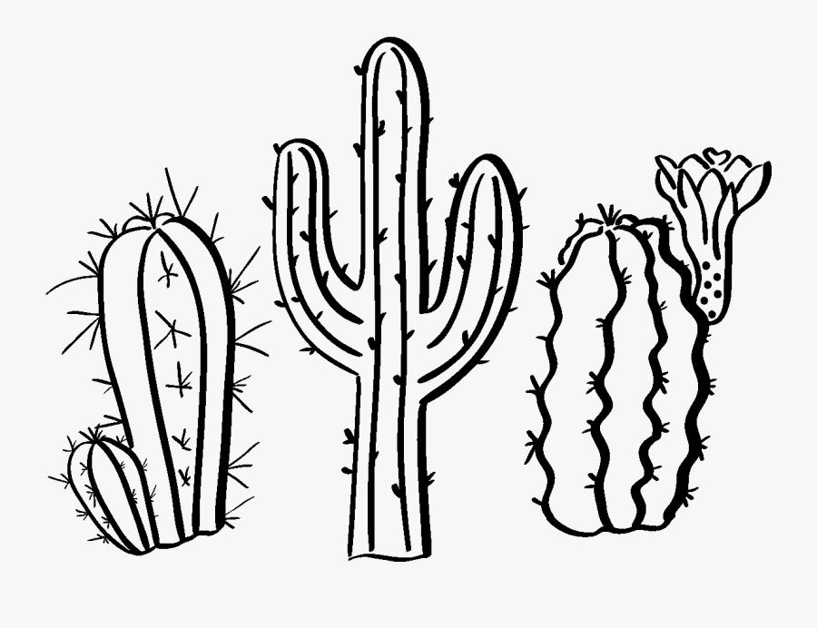 Sticker Boheme 3 Cactus Du Desert Ambiance Sticker - Drawings Of A Cactus, Transparent Clipart