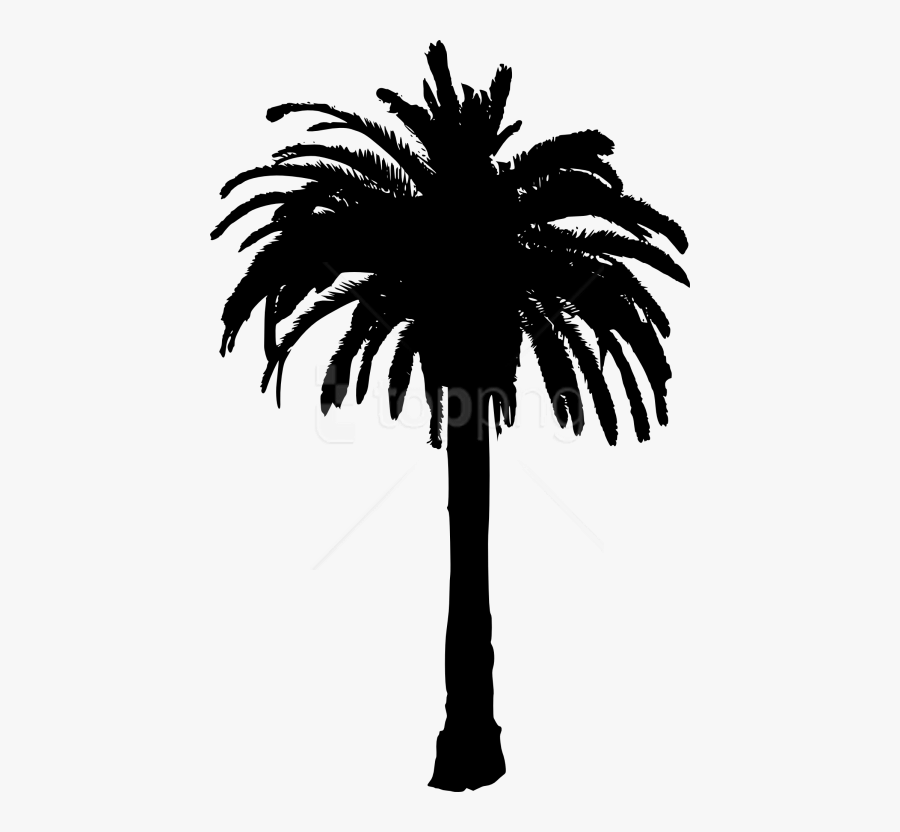 Tree,palm And White,sky,date Palm,woody Palm,monochrome - Date Palm Tree Silhouette, Transparent Clipart