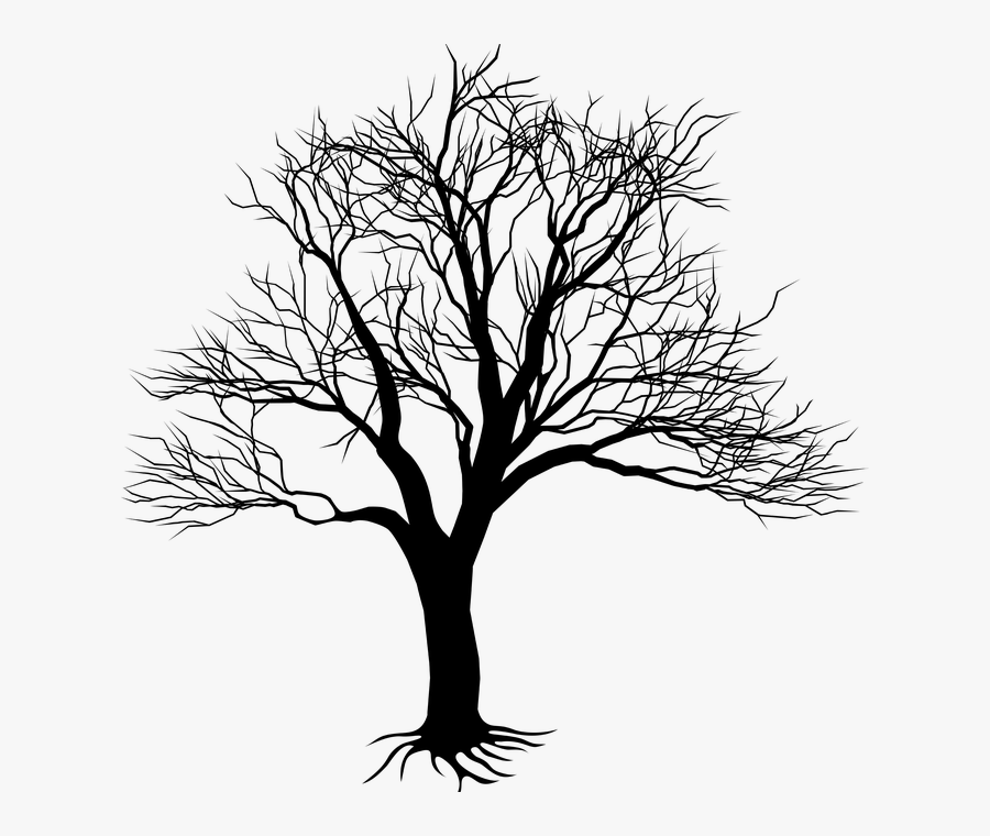 Tree,branch,woody Stem,black And White,illustration,line - Black Tree Silhouette, Transparent Clipart