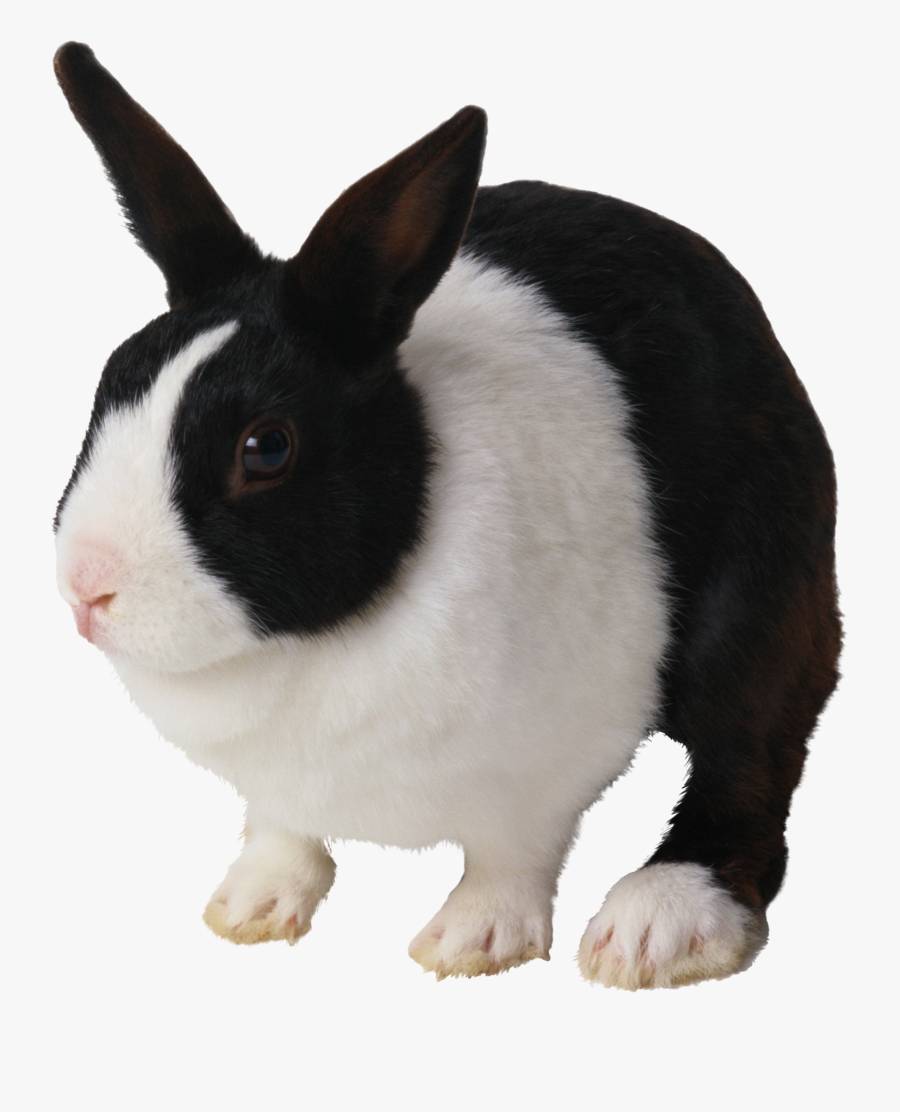 Black And White Rabbit Png Clipart Domestic Rabbit - Black And White Rabbit Png, Transparent Clipart