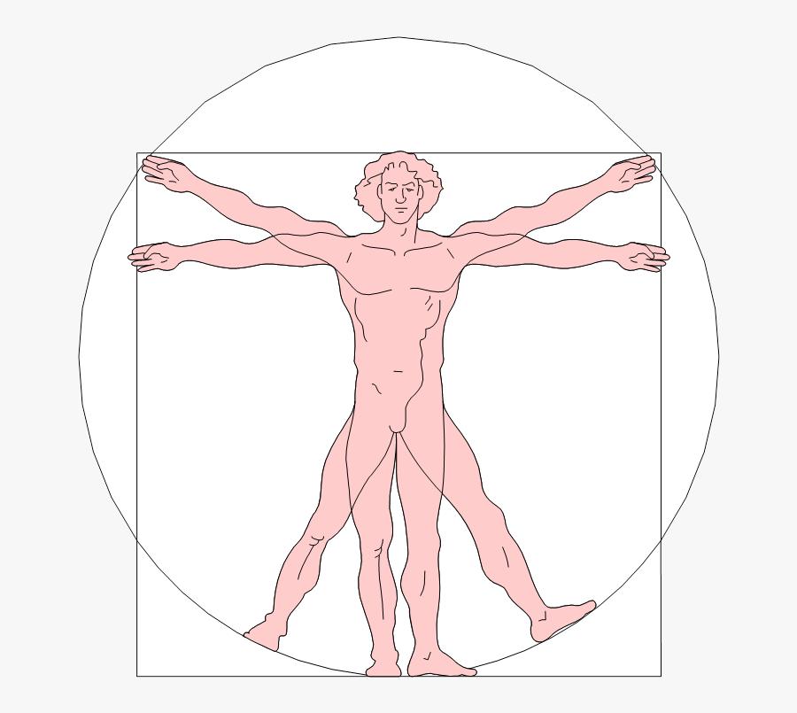 Renaissance Clipart Vitruvian Man - Renaissance Art Leonardo Da Vinci Vitruvian, Transparent Clipart