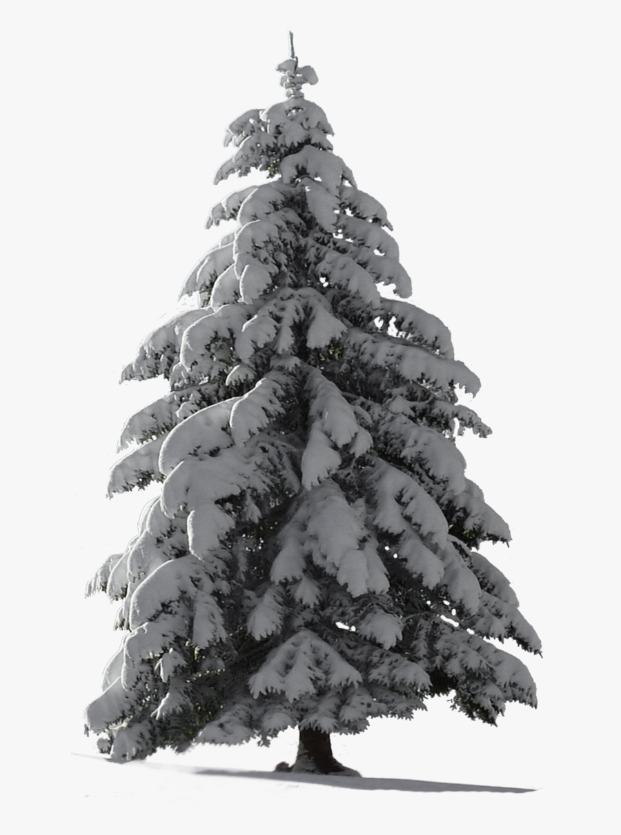Clipart snow tree, Clipart snow tree Transparent FREE for download on  WebStockReview 2020