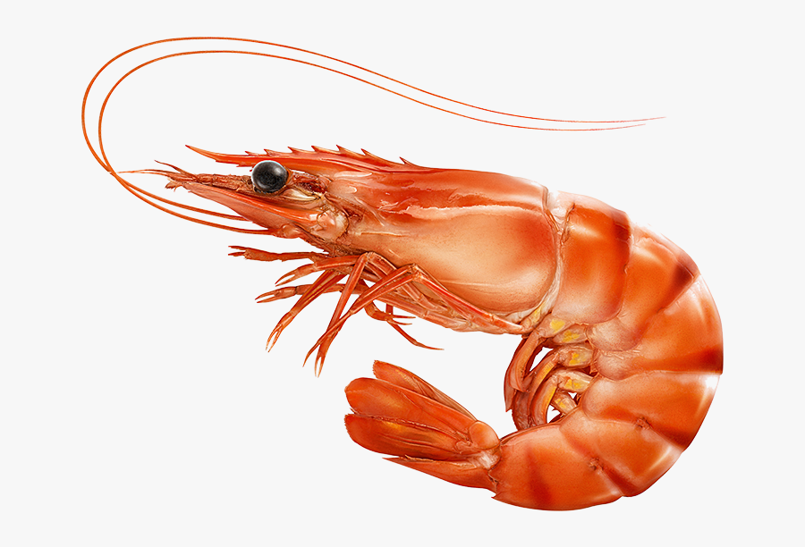 Red Cooked Prawn Or Tiger Shrimp Isolated T, Transparent Clipart