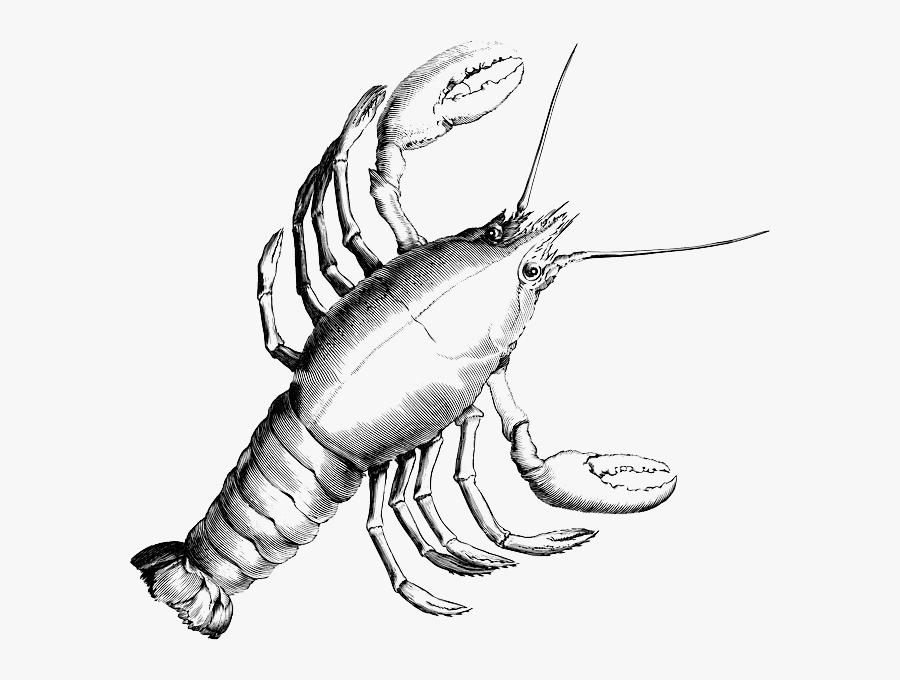 Lobster, Crab, Crustacean, Crayfish, Shrimp, Crawfish - Cancer Constellation, Transparent Clipart